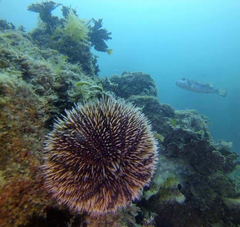 Rocky Point Scuba Diving Providing Scuba Diving Trips